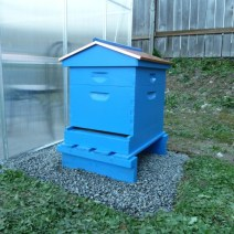 This is our suburban hive, in Woodinville WA next to the greenhouse. This is just after we shook the package: top feeder and one deep. It now has two deeps plus 2 westerns, by Jami Carter.