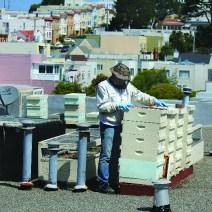 Charlie Blevins' San Francisco rooftop hives.