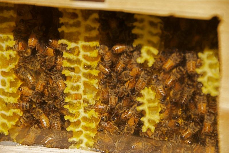 Bees through glass by Thomas Friedland of Ellensberg WA.