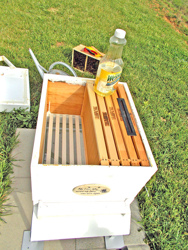 It is never to early to start controlling small hive beetles. The oil is for the beetle trap.