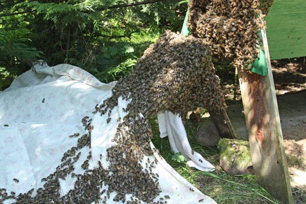 Bees-crawling-up-sheet
