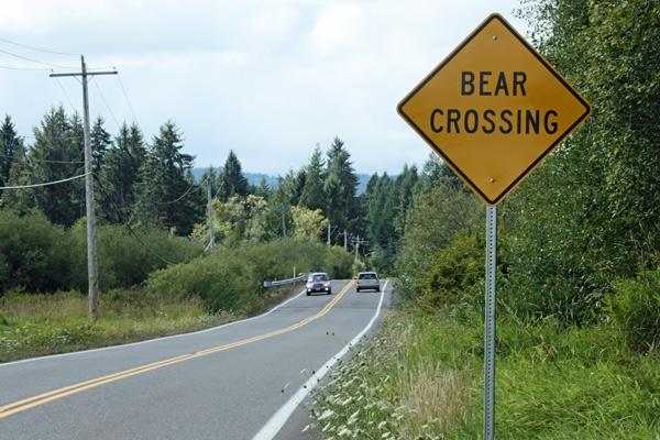 Bear-crossing