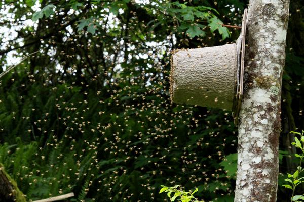 May-24-swarm