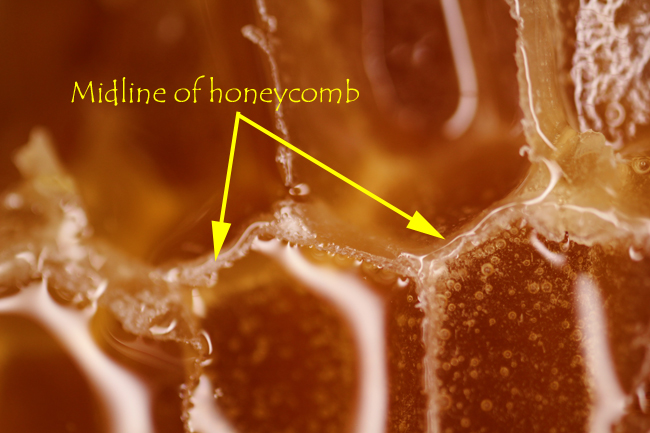 Honeycomb-with-no-foundation