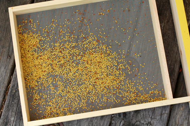 Pollen-in-tray