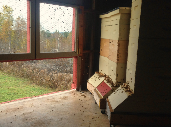 Keeping Bees In A Barn A Lofty Idea Honey Bee Suite