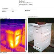 Hive 4 Dec 20 2016