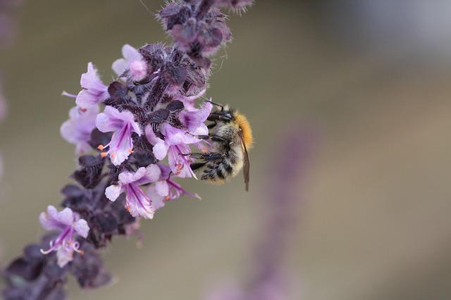 Just nan bee blossoms dating