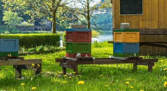 Beekeepers have a responsibility to not let the mites be mites.