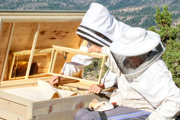 Naomi and Larry Price working their bees in July.