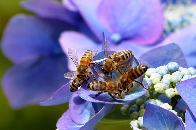 Colonies are not the same, so while bees may look similar, their behaviors may be very different.