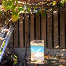 Paul Morgan. Three hives in modest Los Angeles backyard. Two were passing through and stayed. Only our 3rd year. 1st year of harvest. 3 very different personalities. This one is very sociable with large harvests. @copy; Paul Morgan.