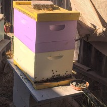 Paul Morgan. Three hives in modest Los Angeles backyard. Two were passing through and stayed. Only our 3rd year. 1st year of harvest. 3 very different personalities. Yellow top most defensive; not using super avail for 6 months. © Paul Morgan.