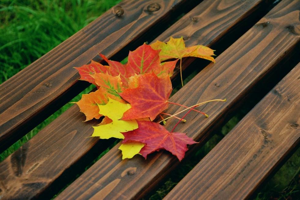 fall-foliage-1740841_1920
