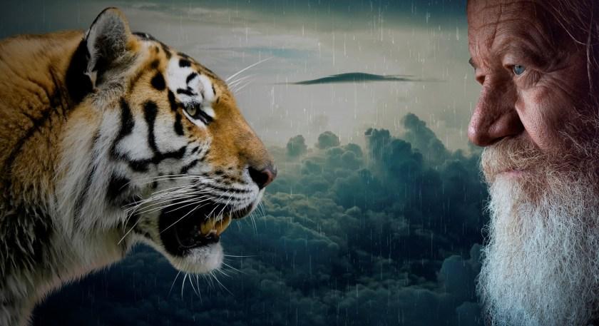 tigers-3637698_1920