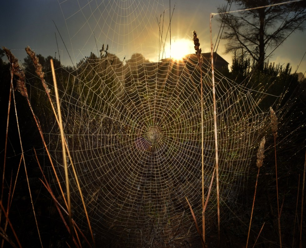 spiderweb-3255340_1920