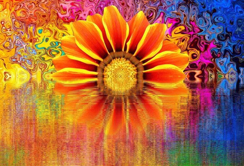 blossom-2021365_1920