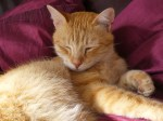 Tomson the cat