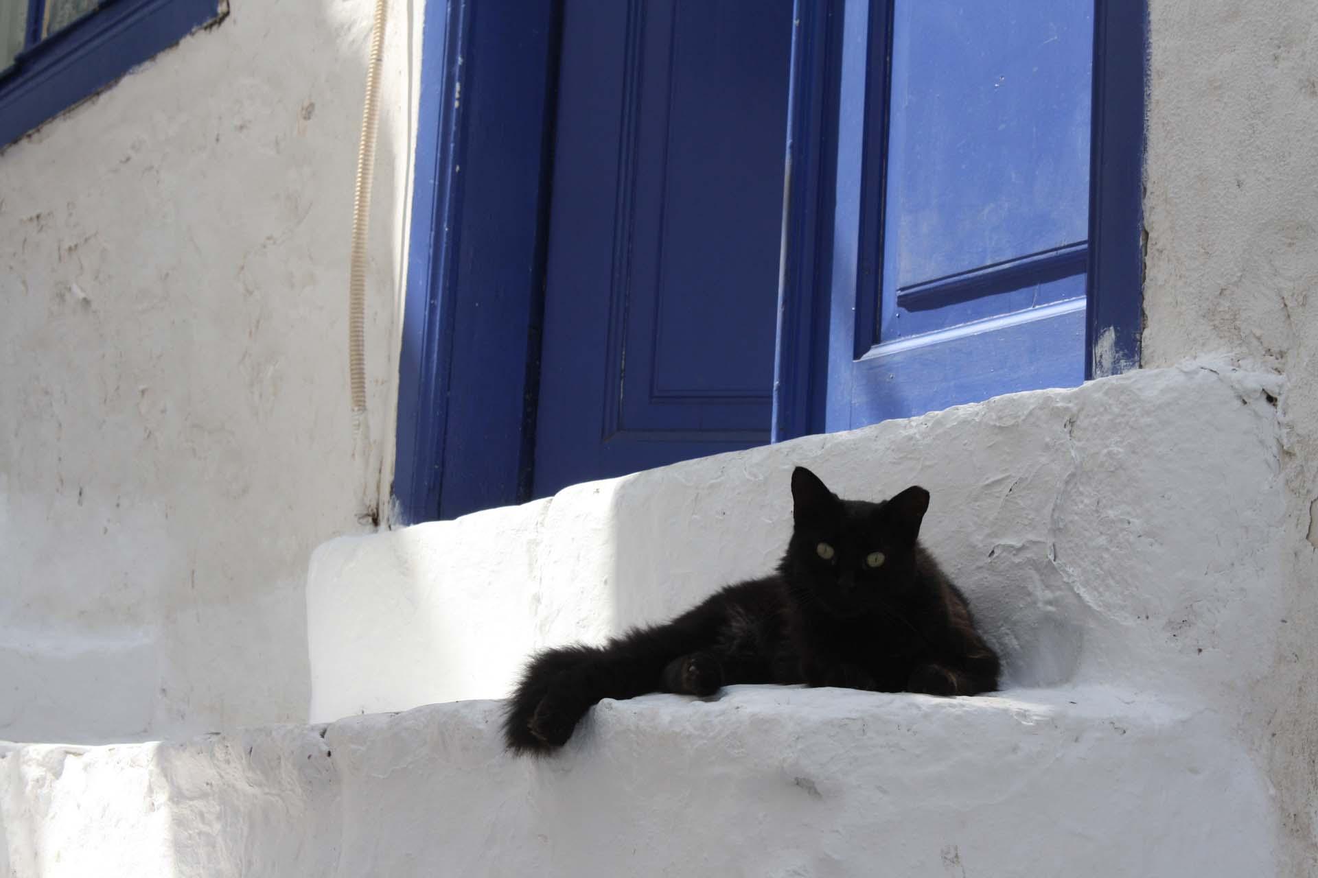 chat noir à Hydra porte bleue