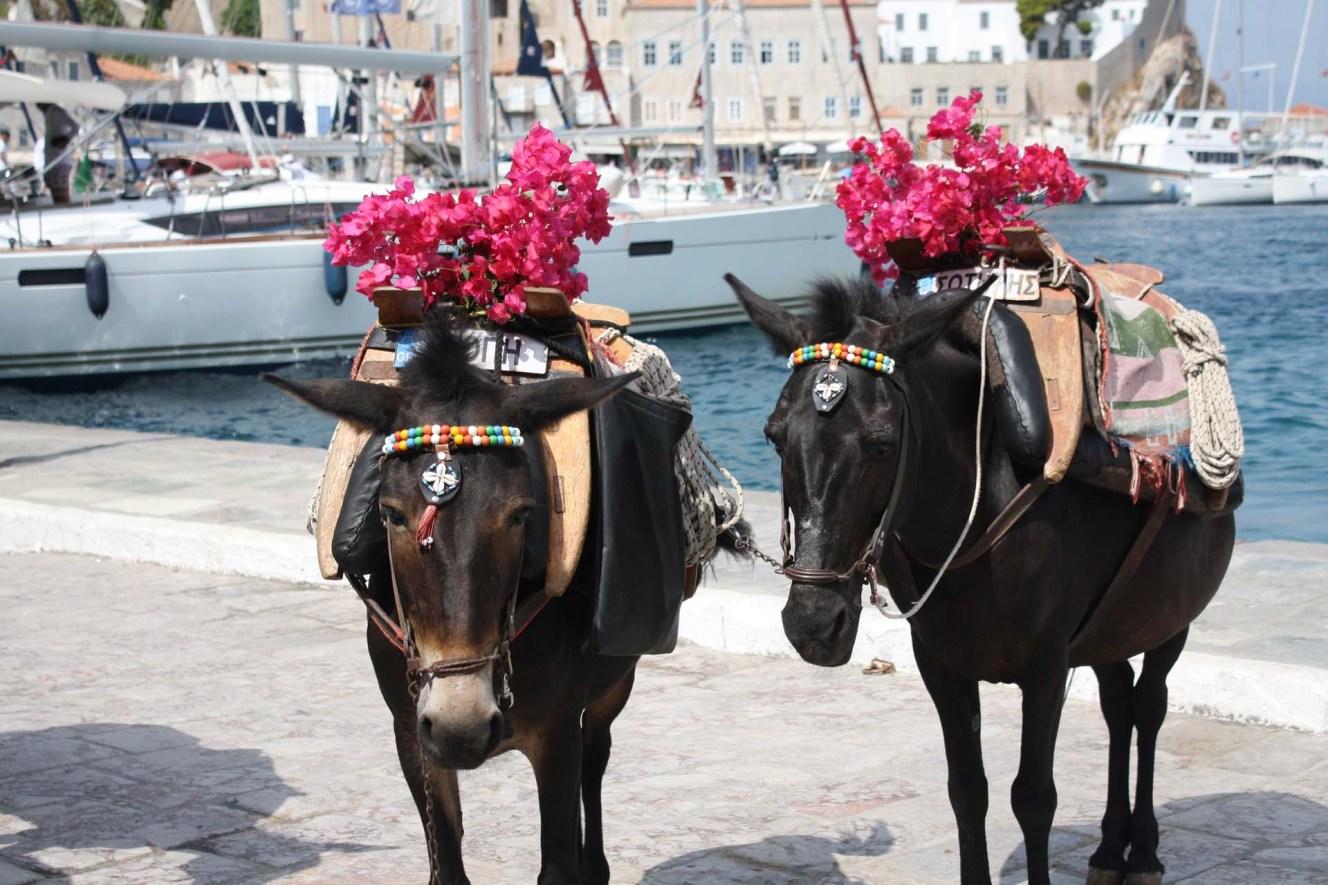 Deux ânes avec bougainvilliers devant le port d'Hydra