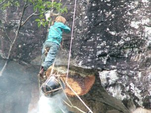 Collecting honey from cliff