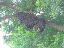 Comb on tree