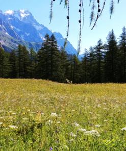 Millefiori di Alta Montagna