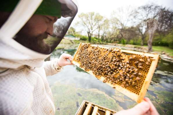 Beekeeper observing a frame