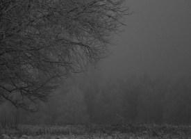 Kördi vanad puud ja udu