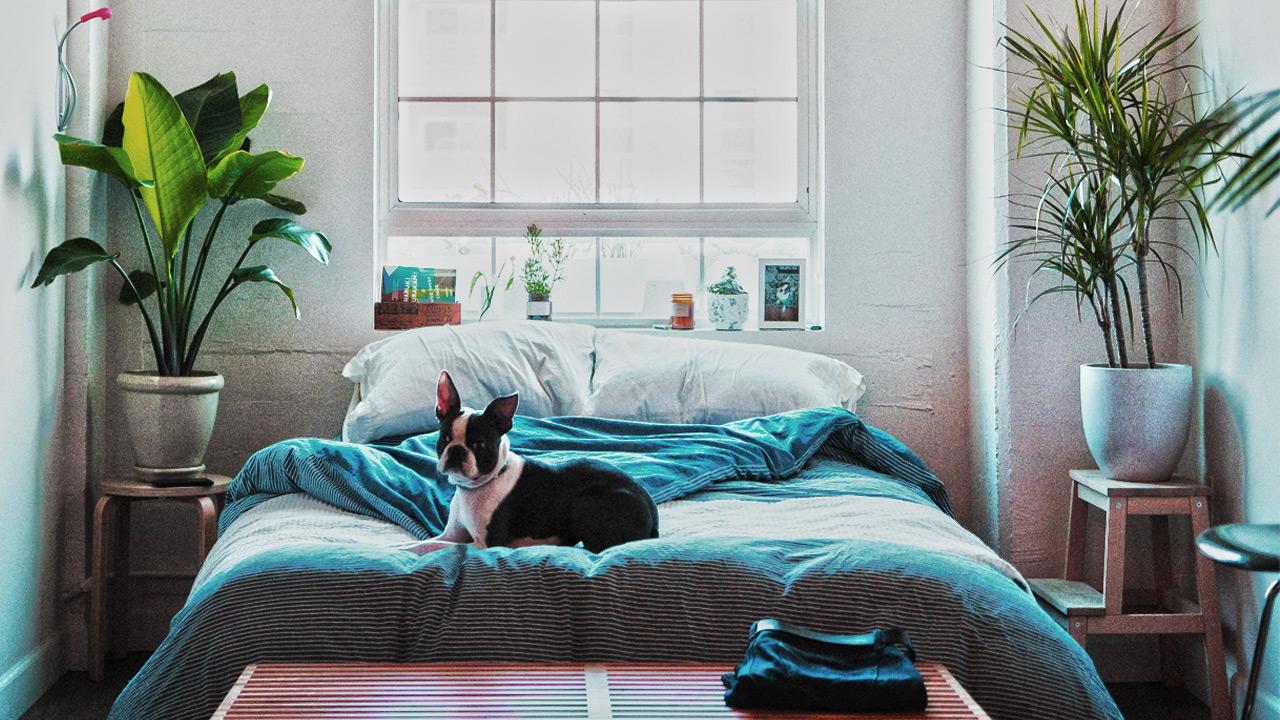 raumklima schlafzimmer erfreut pflanzen schlafzimmer zeitgen ssisch sch nes wohnungideen. Black Bedroom Furniture Sets. Home Design Ideas