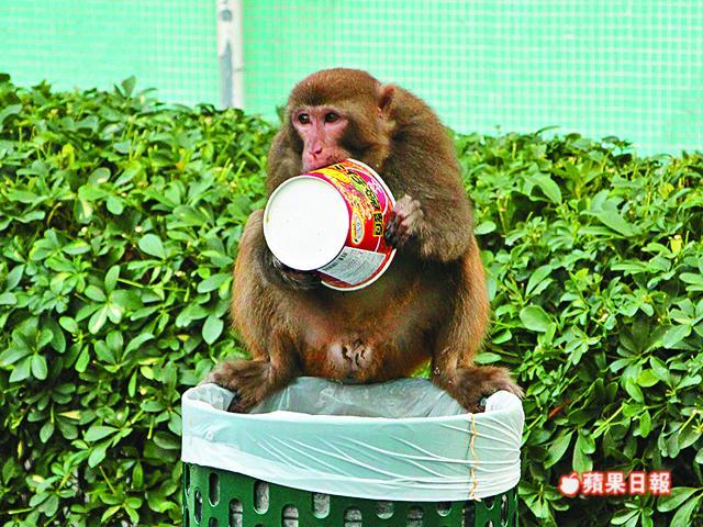 Wild monkeys stealing food.