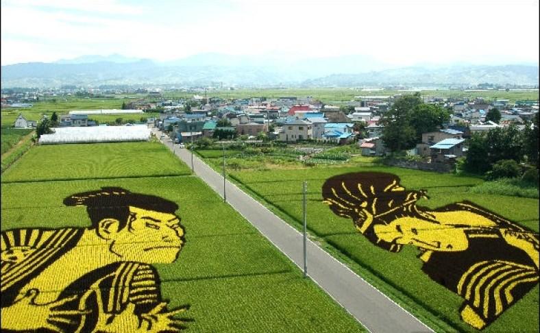 Japan rice paddy fields