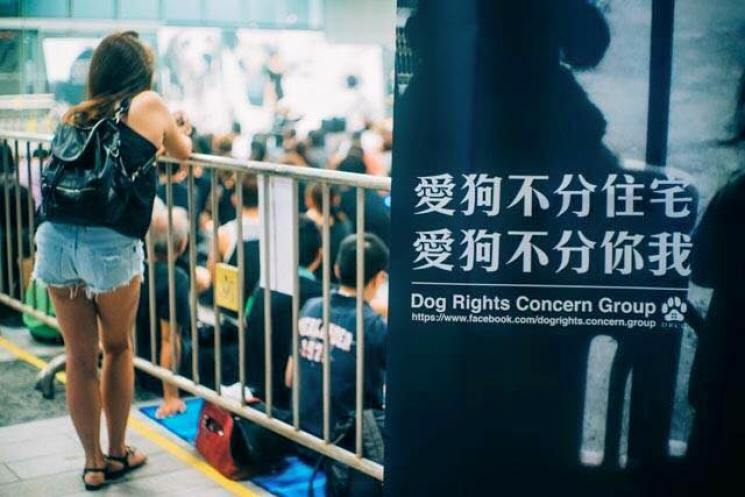 dogs rights gathering