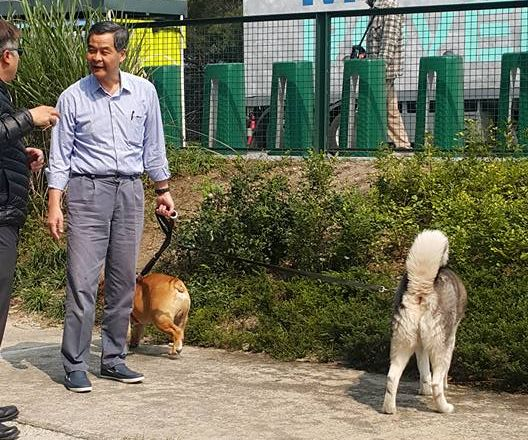 CY and dogs