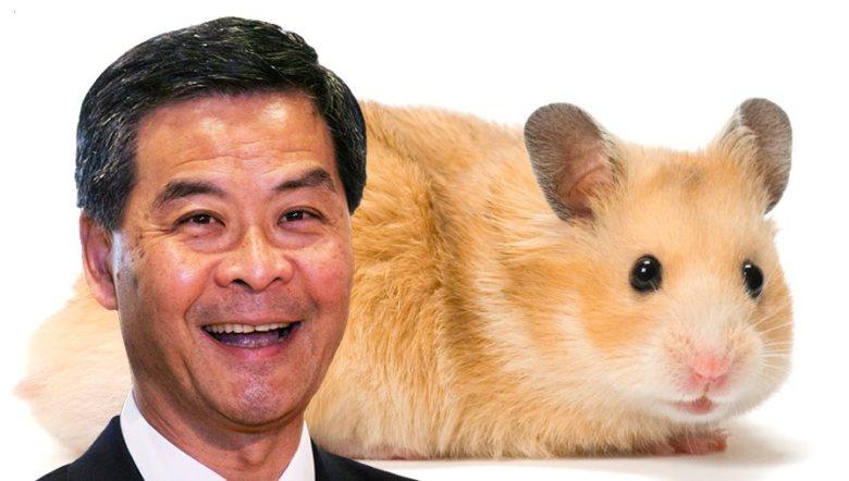 hamster cy