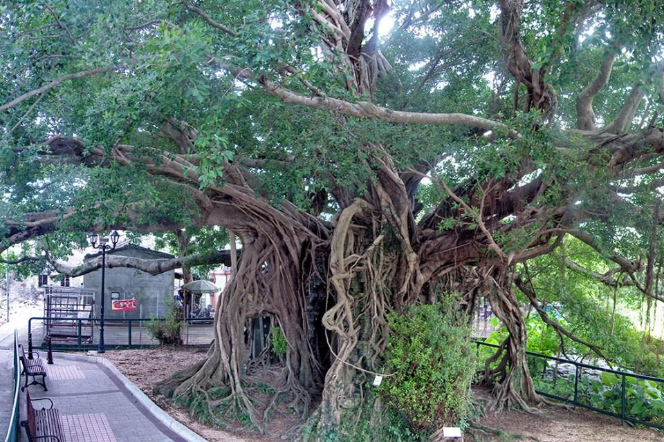 Kam Tin tree house
