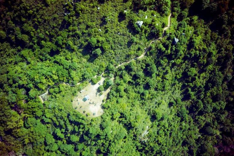 lantau reforestation