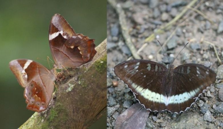 Butterfly country park tai lam