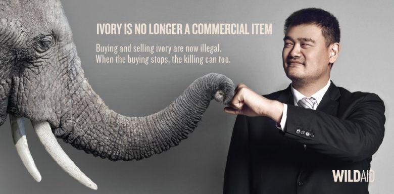 yao ming ivory