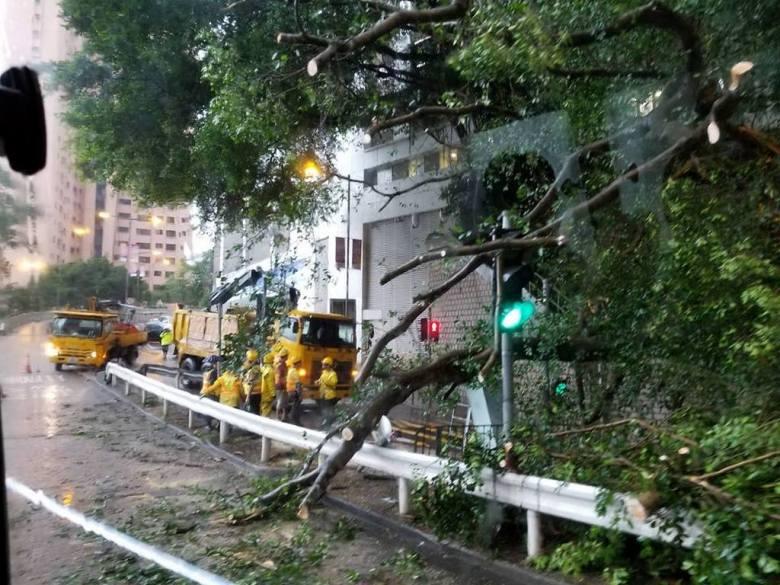 Fallen tree Mid levels Canossa hospital robinson road