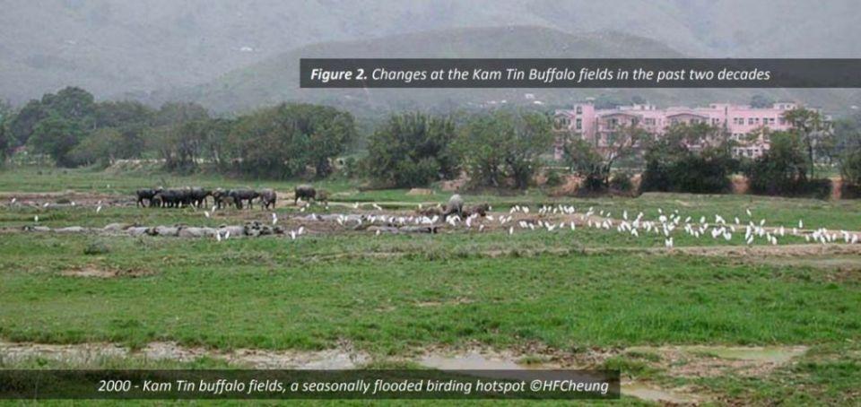 Kam Tin Buffalo Fields Bird Watching Society