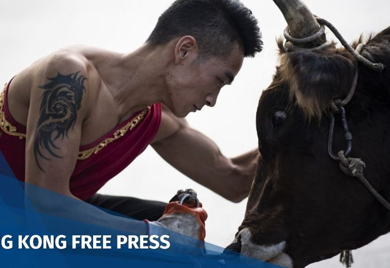 bull fight China