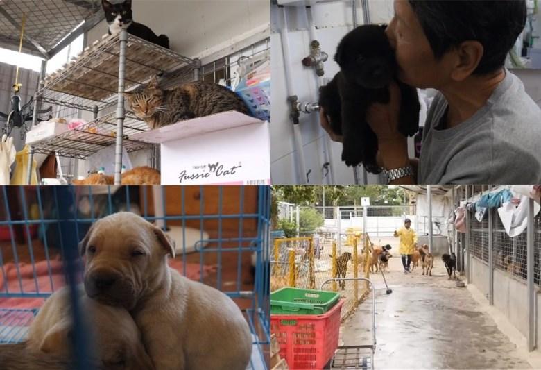 hong kong dog shelter