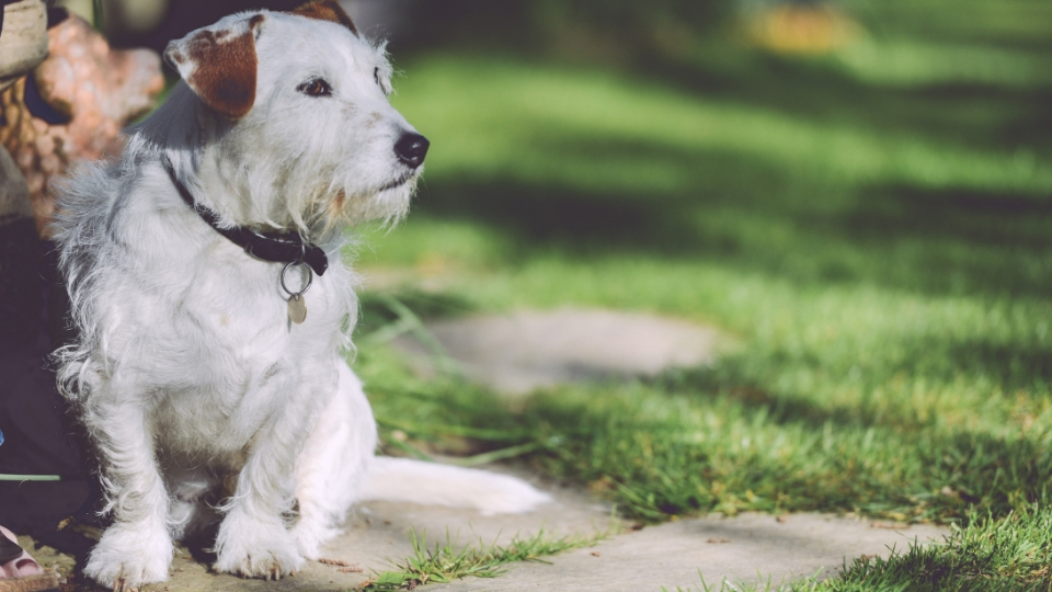 dog friendly holiday accommodation in South East Cornwall