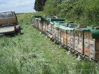 Honig-Soter 008