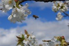 Honig-Soter 014