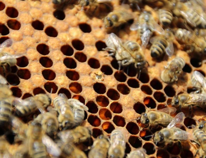 Honigzauber – oder der Weg vom Nektar zum Honig