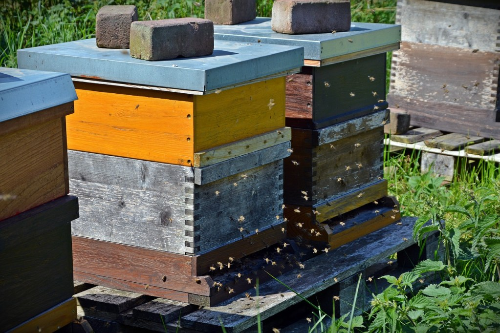 Bienenstock kaufen Bienenkasten