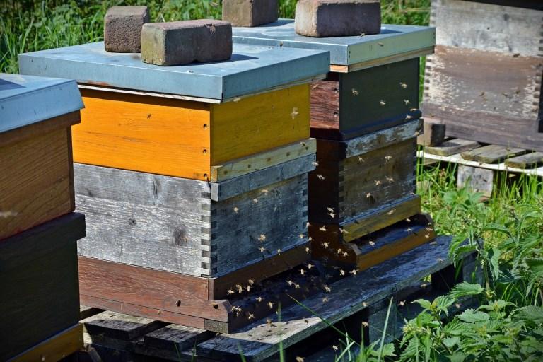 Bienenstock kaufen