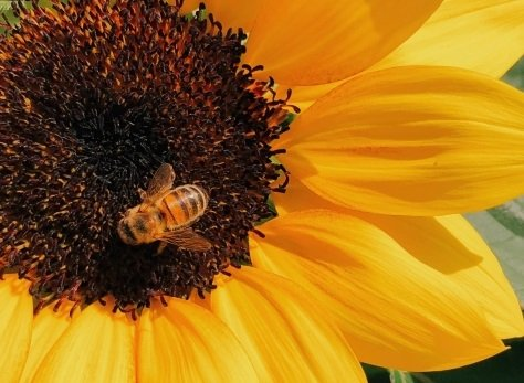Honigsorte Blütenhonig